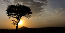 Silhouette of a tree at sunset on the African Savanna