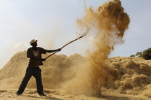 African man with a pitch fork tossing teff to separate the straw from the seed. The wind blows away the husk and straw while the seed falls directly to the ground where it can be collected.