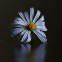 isolated white flower