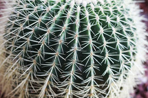 spines on a cactus ball