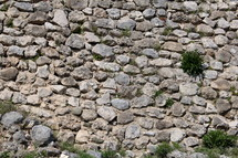 plants growing in a stone wall