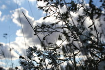 Silhouette of weeds under the clouds.
