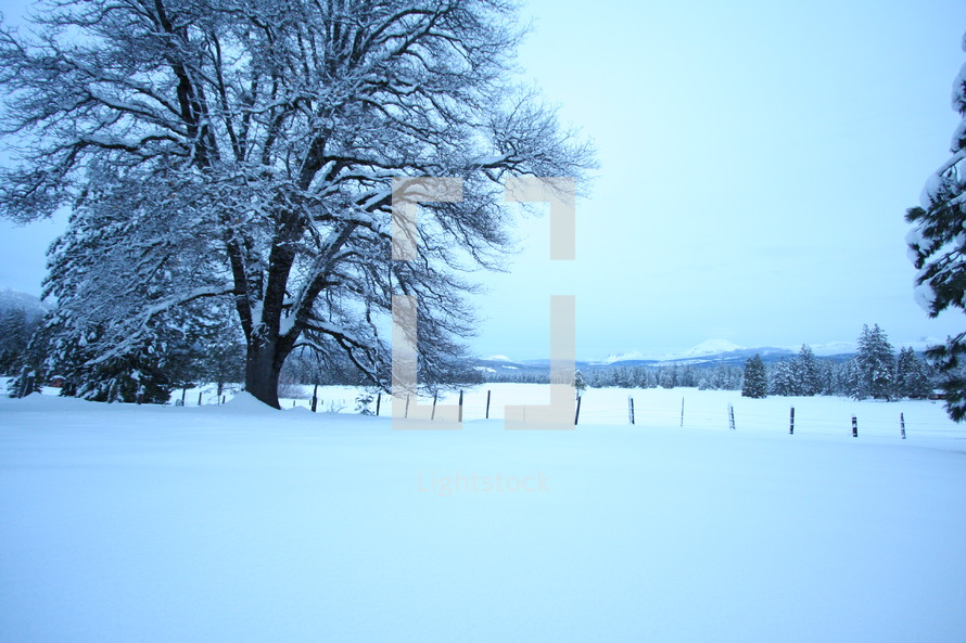 Snow covered pasture