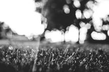 sunlight over grass