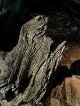 Driftwood on the ocean shore.