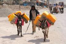 donkeys hauling water
