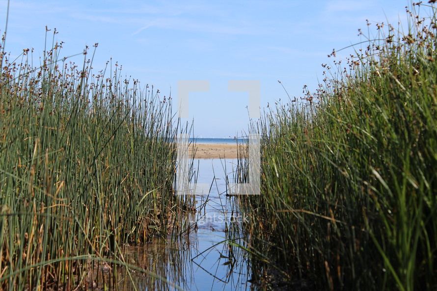 reeds around a lake shore