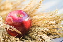 apple resting on wheat grains