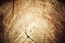 Chopped tree