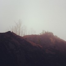 fog and trees growing on a mountain top