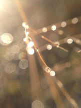 bokeh raindrops on a twig