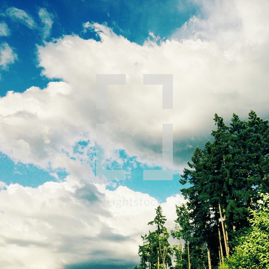 White clouds in a blue sky above tall trees.