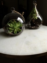 succulent plants in a globe planter