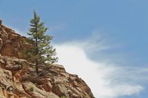 Single pine tree on a rocky hillside.