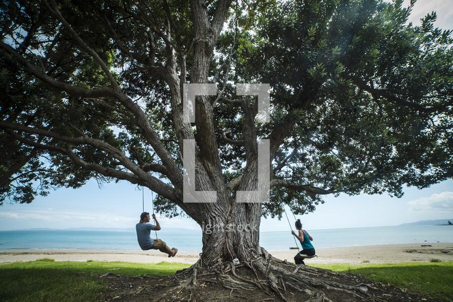 swings on a tree