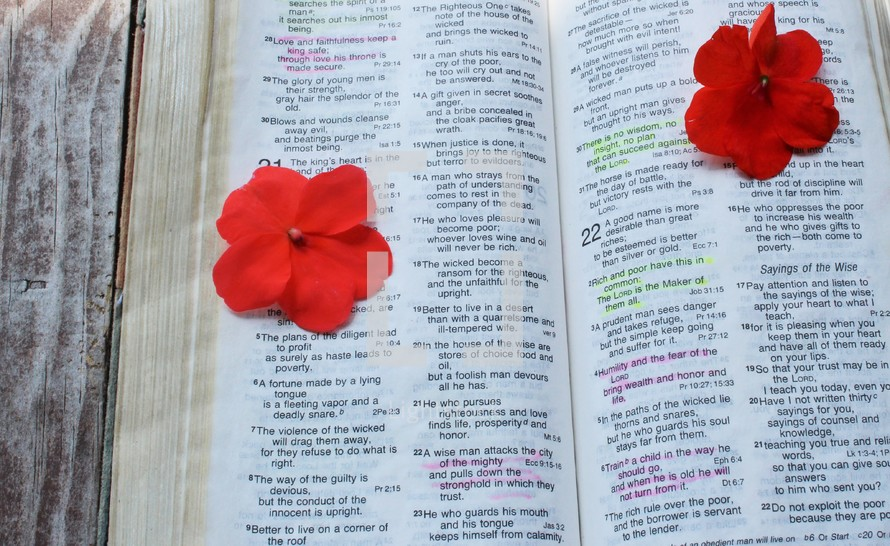 red flowers on the pages of a Bible