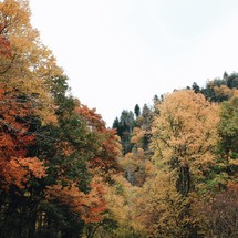 colorful fall trees in a forest
