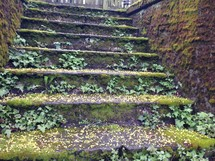 ivy growing on outdoor steps