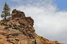 Single tree on a rocky hillside.