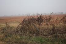 brown grass in a foggy field