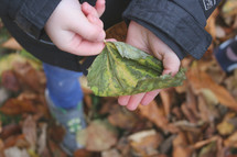 boy holding a fall leaf