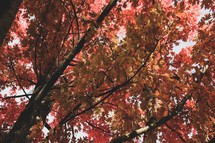 red fall foliage