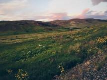 wildflowers on green hills
