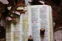 acorns on a Bible