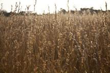 Bouconne field