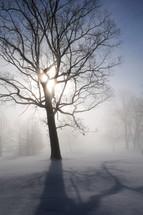 Dormant tree on a winter landscape.