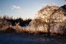 Ice-Covered Trees after Winter Stom are Sunlit