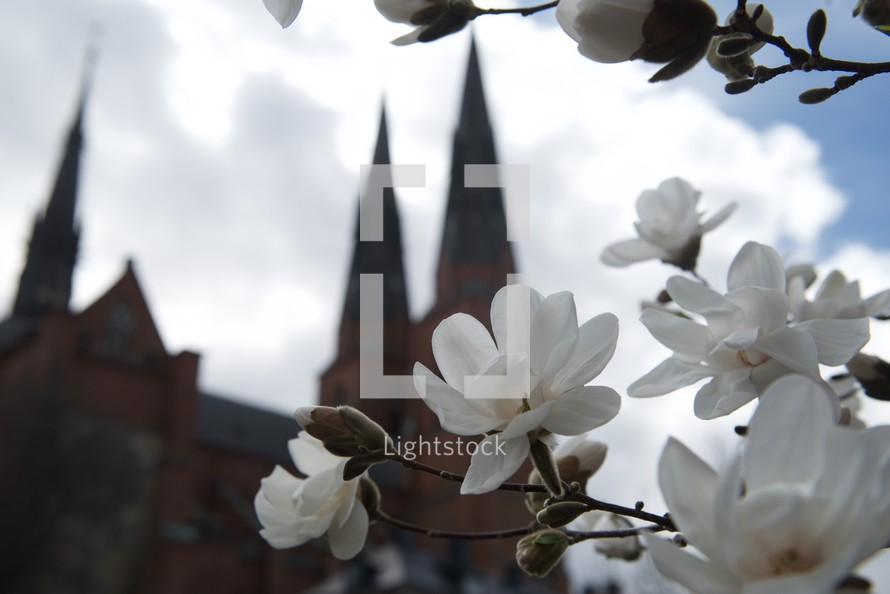 view of a Cathedral and white spring blossoms