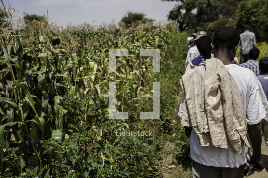 workers leaving a corn field in Ethiopia