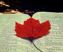 red maple leaf on pages of a Bible