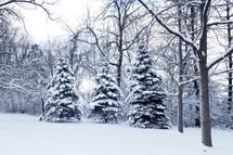fresh winter snow