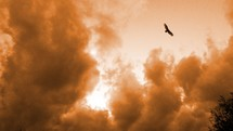 A Hawk soars gracefully over storm clouds with no effort as storm clouds roll by underneath its wings. This is how we as believers in Christ are supposed to live. Effortlessly without a care in the world soaring above whatever problems the world may bring.
