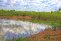 Pond and grass