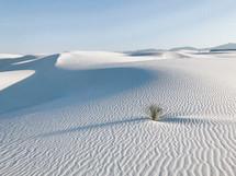 white desert sands