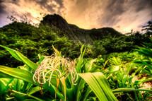 tropical flowers blooming
