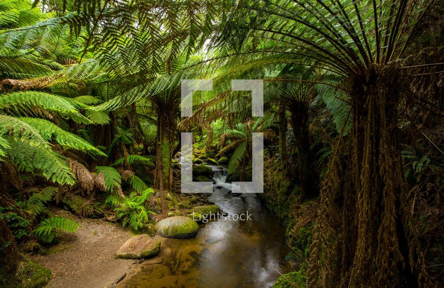 A stream through a lush forest.