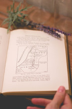 sprig of lavender on a pages of a book