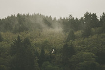 A large bird flies above a forest.