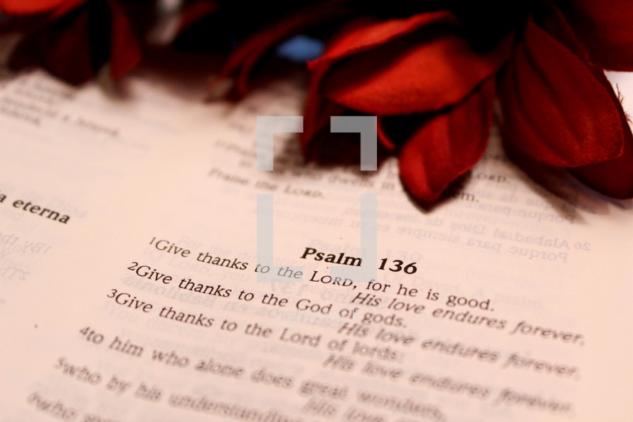 Psalm 136 and red flowers