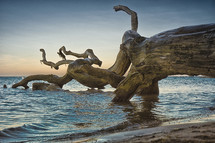driftwood on a shore