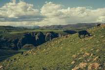 grazing cattle on a hill