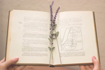 sprig of lavender in a book