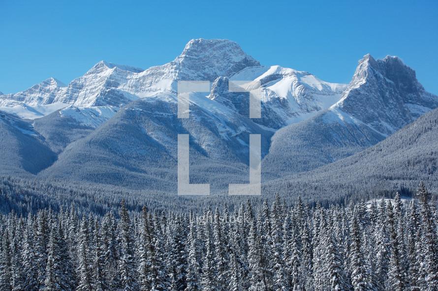 winter snow on trees on a mountain peak