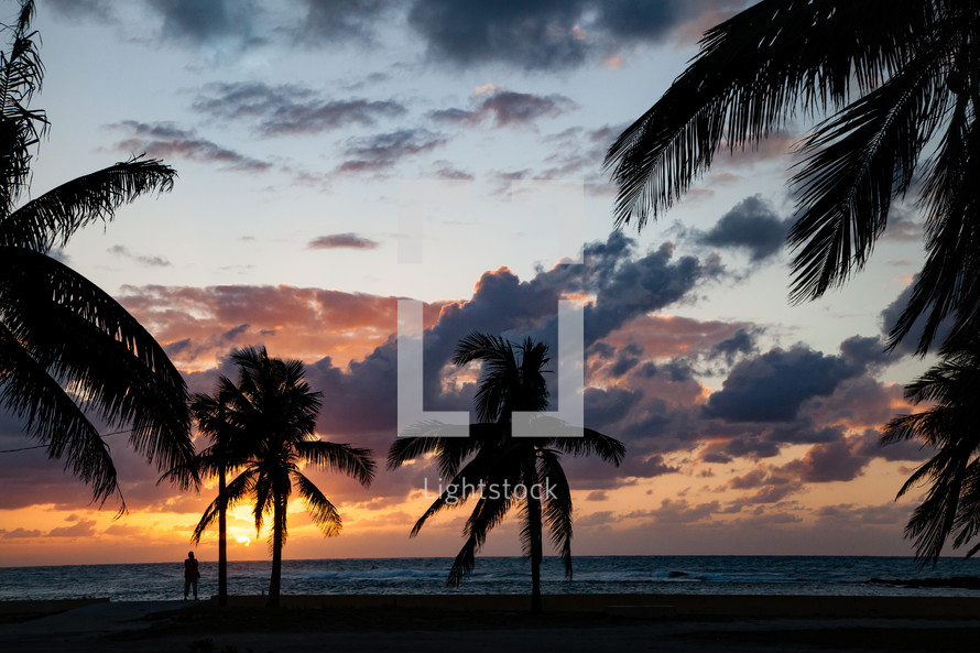 silhouettes of palm trees at dusk on a beach