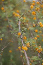 small yellow flowers on a tree branch