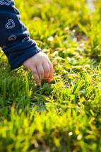 infant hand picking grass